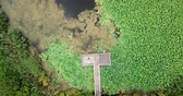 Stunning aerial drone stock footage of flowering lotuses on the lake near the road in Krasnodar Krai of Russia.
