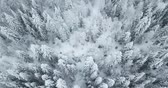 havadan görünüş : Aerial flight above winter forest on the north of Russia Stok Video