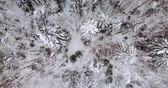 geada : Aerial top down view of the fir forest covered the snow Stock Footage