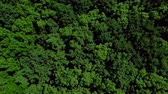 tűlevelű : Drones Eye View - 4K aerial top view of summer green trees in forest background, Caucasus, Russia. Stock mozgókép