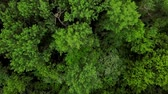 мистический : Drones Eye View - 4K aerial top down view of forest trees background