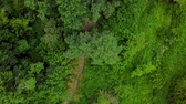 harikalar diyarı : Drones Eye View - 4K aerial top down view of fly over trees pine Stok Video