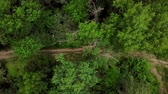 мистический : Drones Eye View - 4K aerial top down view of woodland mysterious trail