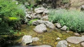 backwater : pond river clear water full of rocks and stones between plants trees and forest near Madrid in Spain Europe