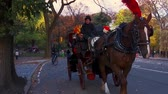 Центральная Америка : NEW YORK CITY, USA - OCT 30, 2018: Horse Carriage in Central Park slow motion in Autumn Midtown Manhattan in New York City.