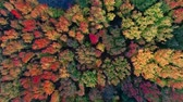 Aerial view of colorful trees in forest from above in Autumn Stock Footage
