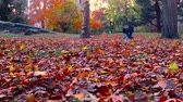 romance : Central Park Autumn in Midtown Manhattan slow motion with beautiful colors and foliage in New York City