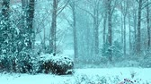 fúria : Snow in woods in winter with cool tone. Stock Footage