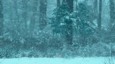 Snow in woods in winter with cool tone. Stock Footage