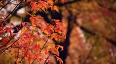 лес : Autumn foliage windy closeup view with beautiful colors.