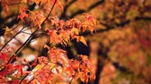 erdő : Autumn foliage closeup view with beautiful colors.