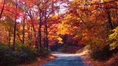 Beautiful woods with Autumn foliage and road in park.