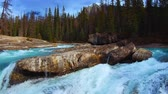 kanada : A closeup view of running water of creek and forest in Banff National Park Canada. Stok Video