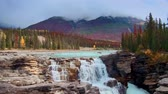 banff : Colorful waterfall with Autumn foliage in Jasper National Park Canada. Stock Footage