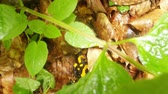 pretty : salamander hiding in foliage