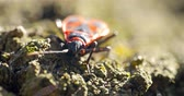 stink : Shield Bug Insect Macro On Tree Stock Footage