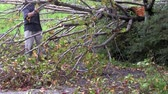 bez domova : MANGONUI, NZL - JULY 09 2014:A man cutting a storm damaged tree.High winds lashing the upper North Island of New Zealand have knocked down trees, blown roofs off houses and cut power to thousands.