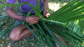 gelenek ve görenekler : Fijian man hands create a basket from weaving a Coconut Palm leaves.Travel Fiji culture. Real people copy space