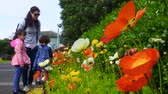 flowering bulbs : Mother and daughter looks at colourful Anemone coronaria flowers blossom in the garden. Spring season. Nature background.