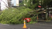 náhodný : Tree crashed on a car in Queen Street due to a very high winds and bad weather in Auckland, New Zealand.