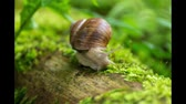 espiral : Time Lapse - Snail creeps through the picture