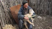 bedelaar : A very old sick man sits on a stool holding a goat in his hands, playing and feeding. Stockvideo