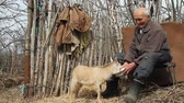 dede : A very old sick man sits on a stool holding a goat in his hands, playing and feeding. Stok Video