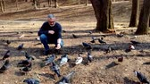 empatia : A gray-haired bearded man feeds a flock of pigeons in the park in spring. Archivo de Video