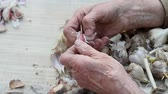 зубок чеснока : Close-up of old womans hands sifting and peeling garlic before cooking or planting in the ground outside, life on an old farm, own harvest, selective focus Стоковые видеозаписи