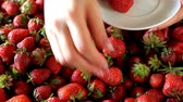 toallas de cocina : Closeup of female hand picking juicy fresh ripe strawberries and putting it on a white saucer, selective focus