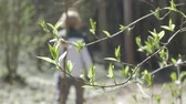 summer : Spring leaves. Airing. Stock Footage