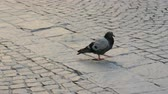Lonely pigeon on the sidewalk.