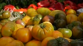Yellow Tomato display at market. Close up Stock Footage