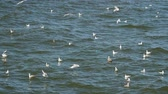 fluently : Seagulls flying and swimming in the Baltic sea, slow motion. Stock Footage