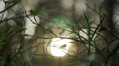 slowmotion : Sunlight shining through the branches , natural blurred background, Nature abstract background, bokeh background.