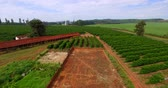 coffee farmers : Chicken sheds and coffee plantation on a small property in a small Brazilian town Stock Footage
