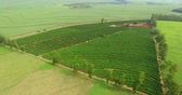coffee farmers : Coffee plantation farm in the interior of Brazil Stock Footage