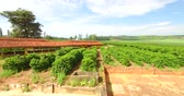 coffee farmers : Very simple house and a coffee plantation in the interior of Brazil