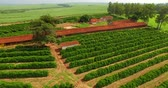 hejno : Small coffee plantation farm in the city of Victorian, São Paulo Brazil
