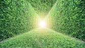 leve : 4K Ivy Tunnel. Nature Green Grass Background.