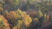 Aerial View of Multicolored Autumn Foliage in Park or Forest. 影像素材