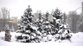 noel ağacı : 4K view of beautiful heavily snow-covered fir trees in the city park after snowfall. Stok Video