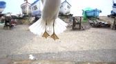 racek : Slow motion of the seagull, catches pieces of food against the background of boats on the seashore.