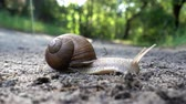 4K view of snail in the sink crawls along the ground into the green grass. Close-up. Dostupné videozáznamy