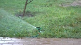 разбрызгиватель : Watering hose irrigated green grass on the lawn and walkway. HD video Стоковые видеозаписи