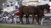 Horse-drawn carriage on the street. HD video