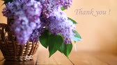 grateful : branch of blossoming spring lilac Stock Footage