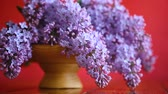vazo : branch of blossoming spring lilac Stok Video
