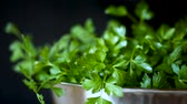 fresh green parsley on a black background