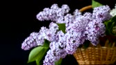 ваш : spring blooming bouquet of lilac in a basket